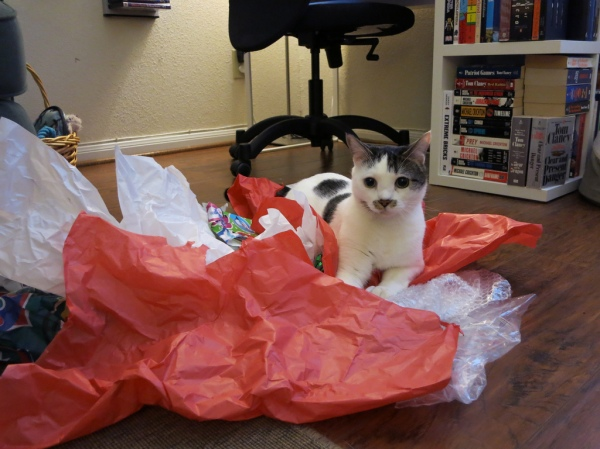 Annie took this great pic of Rayleigh nesting in the remnants of our presents.